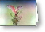 Roseate Spoonbill Greeting Cards - Roseate with Wings Outspread Greeting Card by Bonnie Barry