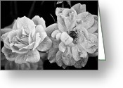 Brian Kerls Greeting Cards - Roses in Black and White Greeting Card by Brian Kerls