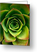 Ost Photo Greeting Cards - Rosette Greeting Card by Nadya Ost