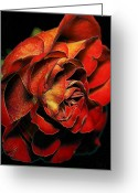 Flower Curves Greeting Cards - Rosey Hues Greeting Card by Bill Tiepelman