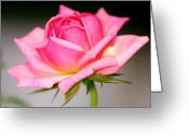 Sniff Greeting Cards - Rosey Pink Greeting Card by Karen M Scovill