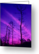 Winter Trees Photo Greeting Cards - Rosy Fingers of Dawn Greeting Card by Gerard Fritz