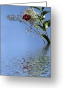 Babys Greeting Cards - Rosy Reflection - Right Side Greeting Card by Gravityx Designs