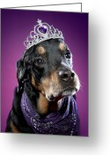 Tiara Greeting Cards - Rotweiler Dog Looking Confused With Tiara On Head Greeting Card by Cavan Images