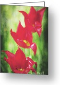 Decorativ Photo Greeting Cards - Rouge Greeting Card by Angela Doelling AD DESIGN Photo and PhotoArt