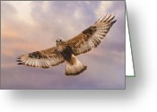 Birds Of Prey. Clouds Pyrography Greeting Cards - Rough legged Hawk Greeting Card by David Martorelli