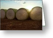 Conformity Greeting Cards - Round Bales Of Picked Cotton Greeting Card by Avi Morag photography