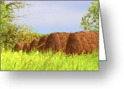 Bales Greeting Cards - Round Bales Greeting Card by Tom Mc Nemar