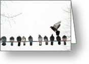 Flock Greeting Cards - Row Of Pigeons On Wire Greeting Card by Ernest McLeod