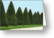 Versailles Greeting Cards - Row Of Trees Greeting Card by Joelle Icard