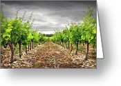 Order Greeting Cards - Row Of Vineyard Greeting Card by Ellen van Bodegom