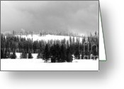 Winter Trees Greeting Cards - Rows and Rows Greeting Card by Julie Lueders