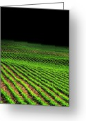 Cornfield Greeting Cards - Rows to Oblivion Greeting Card by Emily Stauring