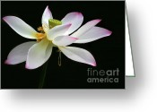 Lotus Bud Greeting Cards - Royal Lotus Greeting Card by Sabrina L Ryan