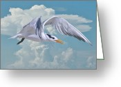 Tern Greeting Cards - Royal Tern in Flight Greeting Card by Delores Knowles