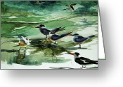 Julianne Felton Greeting Cards - Royal Terns and Black Skimmers Greeting Card by Julianne Felton