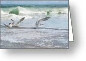 Melbourne Beach Greeting Cards - Royal Terns Greeting Card by Cheryl Davis