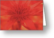 Yellow Flower Digital Art Greeting Cards - Ruby Greeting Card by Molly McPherson