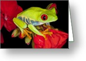 Poison Greeting Cards - Ruby Red Greeting Card by Janet Fikar