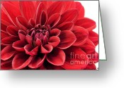 Susan M. Smith Greeting Cards - Ruby Red Greeting Card by Susan Smith