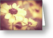 Eyed Greeting Cards - Rudbeckia Flowers Greeting Card by Dhmig Photography