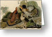 Sportsmen Greeting Cards - Ruffed Grouse Greeting Card by Pg Reproductions