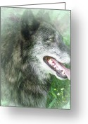 Natural Wolf  Greeting Cards - Run In The Fern Greeting Card by Debra     Vatalaro
