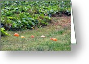 Kay Sawyer Greeting Cards - Runaway Pumpkins Greeting Card by Kay Sawyer