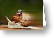 Grape Macro Digital Art Greeting Cards - Runaway Snail Greeting Card by Michal Boubin