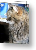 Playful Kitten Greeting Cards - Runcius- My King Kitty 01 Greeting Card by Ausra Paulauskaite