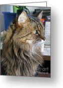Playful Kitten Greeting Cards - Runcius- My King Kitty 02 Greeting Card by Ausra Paulauskaite