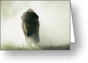 Bison Range Greeting Cards - Running Bison Kicking Up Dust Greeting Card by Lowell Georgia
