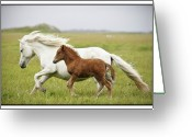 Wild Horse Greeting Cards - Running Horses.... Greeting Card by Gigja Einarsdottir
