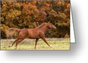 Quarter Horse Greeting Cards - Running into Autumn Greeting Card by Katie Abrams