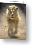 Lion Greeting Cards - Running Lion Greeting Card by Stu  Porter