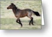 Wild Horses Greeting Cards - Running Wild Greeting Card by Harry Spitz