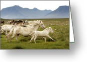 Wild Horse Greeting Cards - Running Wild In Iceland Greeting Card by Gigja Einarsdottir