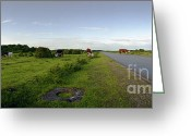 Raf Greeting Cards - Runway Light with Cows Greeting Card by Jan Faul