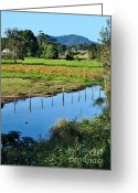 Reflections In Water Greeting Cards - Rural Landscape after Rain Greeting Card by Kaye Menner