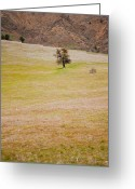 Eastern Turkey Greeting Cards - Rural landscape in Turkey Greeting Card by Gabriela Insuratelu