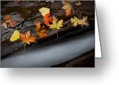 Stream Greeting Cards - Rushing Autumn Greeting Card by Jim Speth