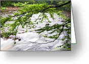 Trout Stream Greeting Cards - Rushing River Greeting Card by Thomas R Fletcher