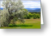 Endurance Greeting Cards - Russian Olive Greeting Card by Karon Melillo DeVega