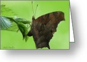 Designer Butterfly Works Photo Greeting Cards - Rustic Butterfly Greeting Card by Debra     Vatalaro