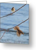 Sparrow Greeting Cards - Rusty Capped Sparrows Male and Female Greeting Card by Bob Orsillo