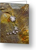 Lichen Greeting Cards - Rusty Red Peridotite with Lichen Greeting Card by Karon Melillo DeVega