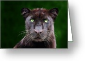 Black Leopard Greeting Cards - Saber Greeting Card by Big Cat Rescue