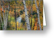 Saco River Greeting Cards - Saco River and Birches Greeting Card by John Burk