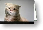 Animal Portrait Greeting Cards - Sad Cat Greeting Card by LeoCH Studio