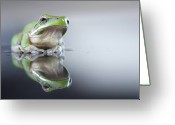 Amphibian Greeting Cards - Sad Green Frog Greeting Card by Darren Iz Photography